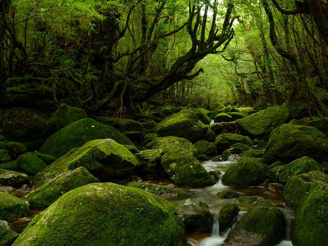 Explore Southern Japan