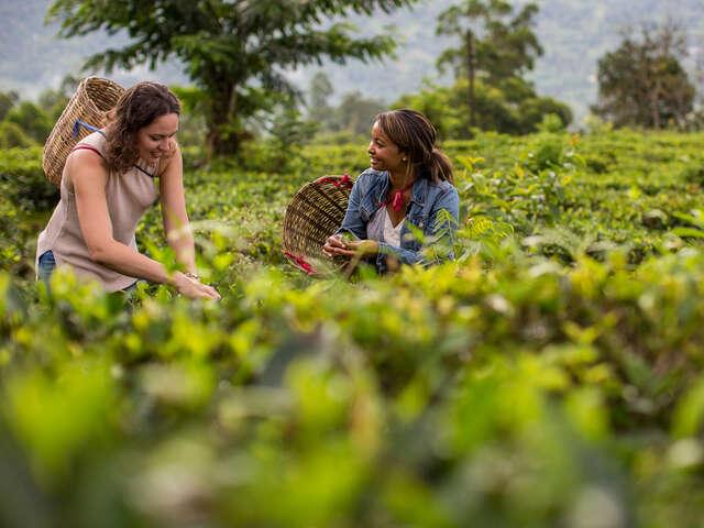 Discover India & Sri Lanka: Plantations & Pink Cities