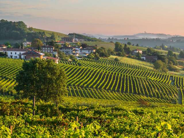 Walking Piedmont and the Barolo Wine Region