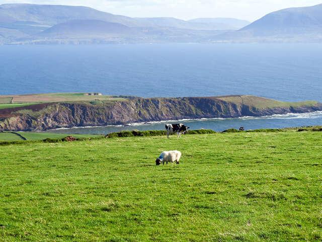Irish Splendor