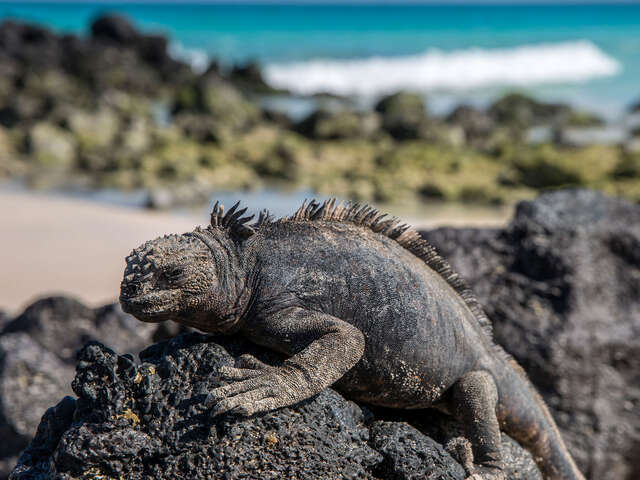 Galapagos - West and Central Islands aboard the Integrity